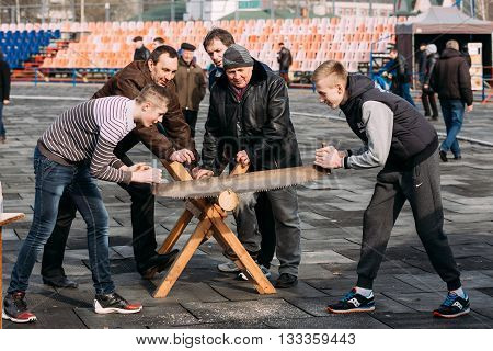 Gomel, Belarus - March 12, 2016: Young men sawing a tree trunk on a traditional holiday fun at  Celebration of Maslenitsa Shrovetide holiday.