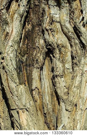 Bark on old wood tree on brown woody plant background