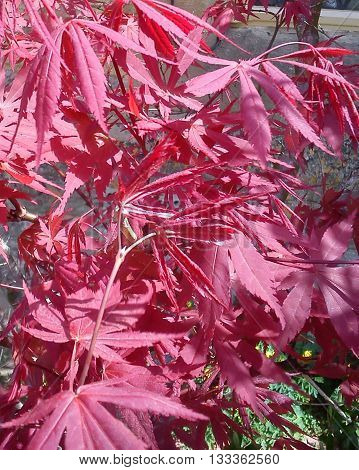 These leaves caught my attention, because their colour was so bright and vivid, like fire.