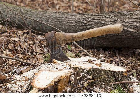 the ax stuck in a tree stump