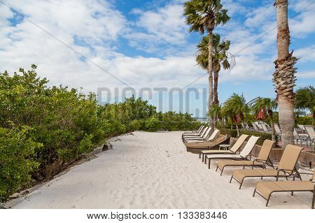 Chaise lounges on a sandy beach under palm trees