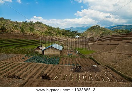 Vegetable garden with a local farm hut on Flores island, Indonesia