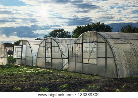 The greenhouse for vegetables on a garden site