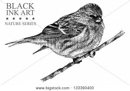 Illustration with bird Redpoll drawn by hand with black ink. Graphic drawing pointillism technique. Element for design