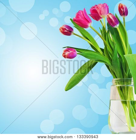Tulip. Pink tulips bouquet of tulips tulips in bouquet tulips for 8 march beautiful tulips.