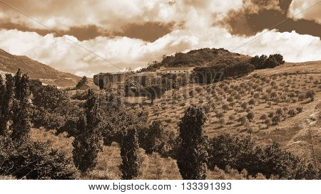 Olive Groves on the Sloping Hills of Sicily in Italy Vintage Style Sepia