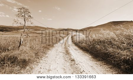 Dirt Road between Wheat Fields on the Hills of Sicily Vintage Style Sepia