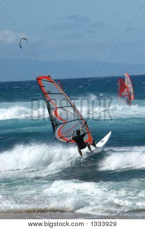Bold Sailboarder