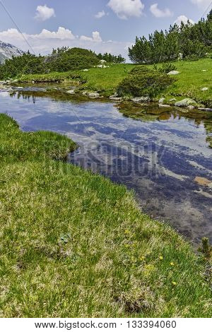 Amazing landscape of green hills and mountain river in Pirin Mountain, Bulgaria