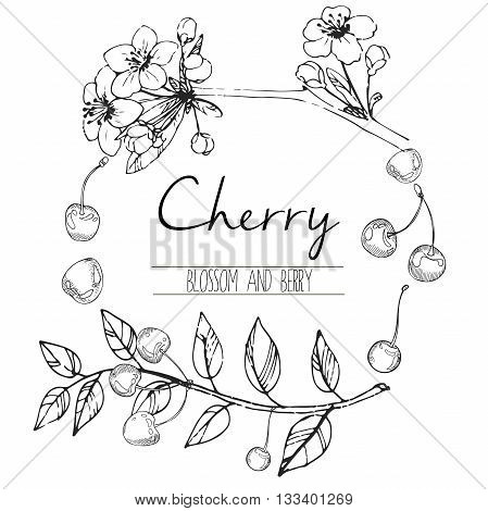 Vector round illustration of cherry blossom and berries. Hand drawn black and white engraved art in round border composition. Summer food for smoothie cocktails desserts and confectionery.