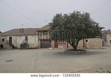 Square and tree in Ucero, Soria, Castilla leon, Spain