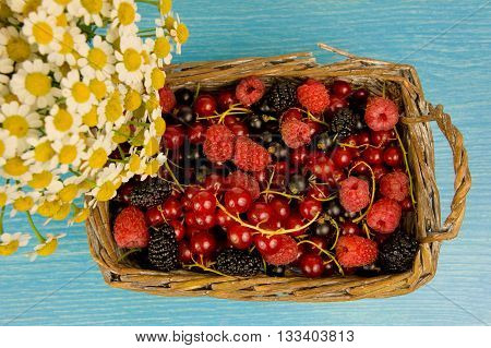 Lug Full of Fresh Raspberries Mulberries and Red Currants