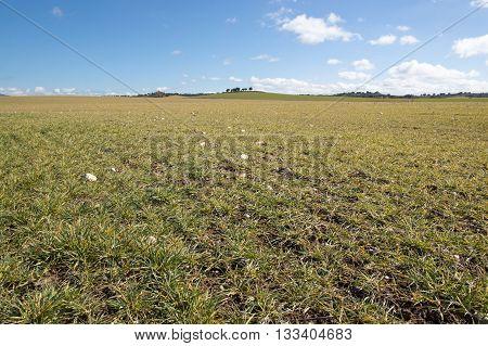 The field in Soria, Castilla Leon, Spain