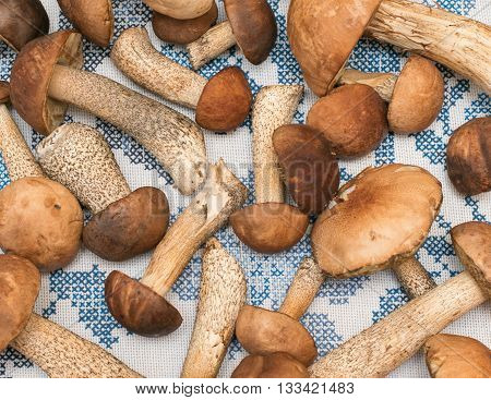 Porcini Mushrooms And Boletus On A Beautiful Tablecloth