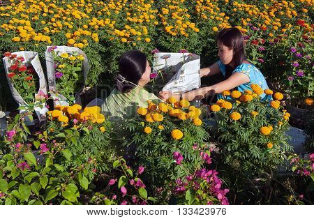 DONG THAP, Vietnam, February 18, 2016 farmers Dong Thap Province, Vietnam, floriculture, in the spring