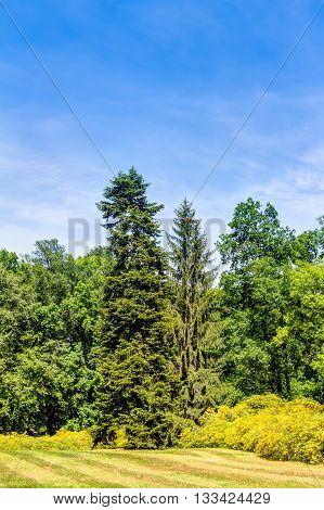 Azalea And Rhododendron Park Kromlau