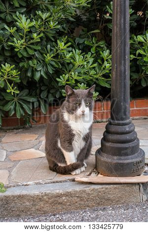 Sad charismatic street cat sitting on the sidewalk next to a lantern in front of the bushes.