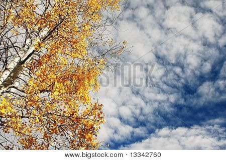 Autumn Aspen and Cloudy Sky