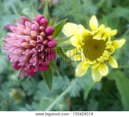A pink flower and a pale yellow flower standing next to each other, looking like friends.