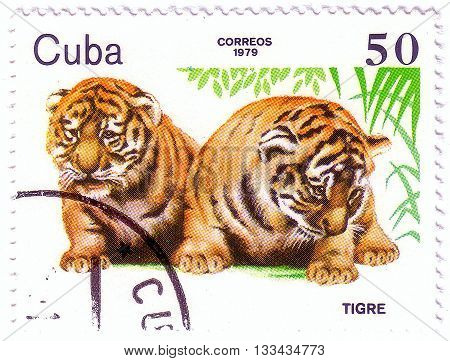 Cuba- Circa 1979: A Stamp Printed In , Shows Tiger Cubs, Zoo Animals, Circa 1979