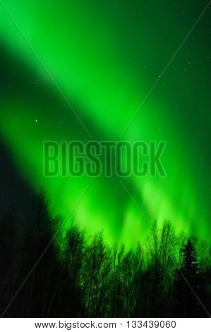 A green aurora reaches diagonally up from a line of trees.