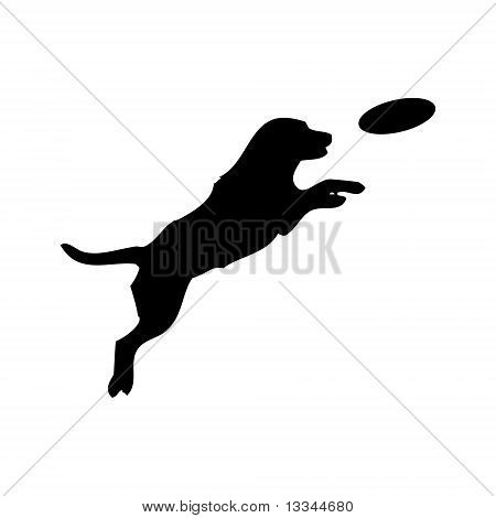 Dog And