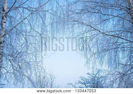 ветви, березы, зима, иней, снег, стволы, голубое, небо