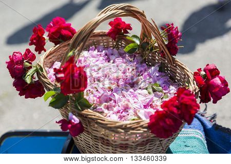 Pink Rose Blossom In Basket