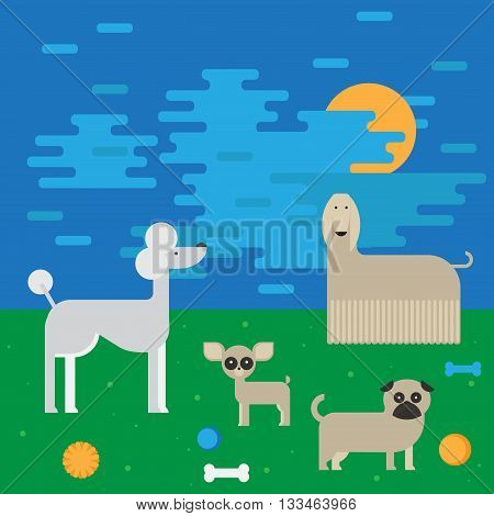 flat dog characters set, cartoon pet animal collection chihuahua, pug and afgan greyhound, vector