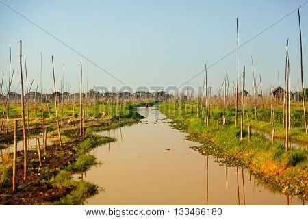 Floating gardens in Inle Lake Myanmar. Intha people support themselves through the tending of vegetable farms on floating gardens.