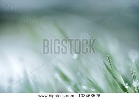 green grass in morning dew fresh spring original natural background