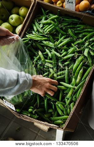 woman with your hands puts the pods of young peas in a plastic bag from a large box on the market