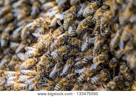 Close view on the swarm of bees on the beehive