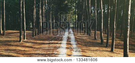 Pathway Forrest Rural Trail Nature Concept