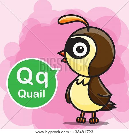 Q Quail animal cartoon and alphabet for children to learning and coloring page vector illustration eps10