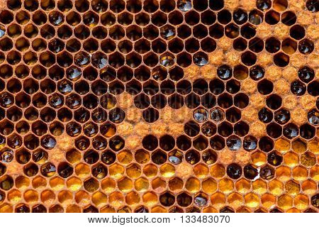 Close view on the honeycomb in the beehive