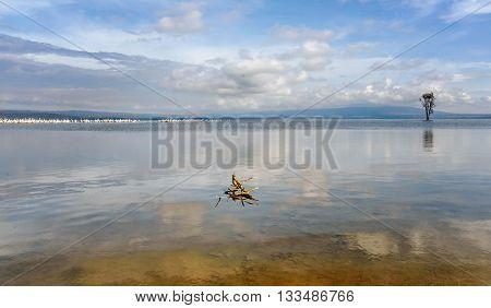 Masses of White Pelican birds and flamingos on the lake Nakuru Kenya