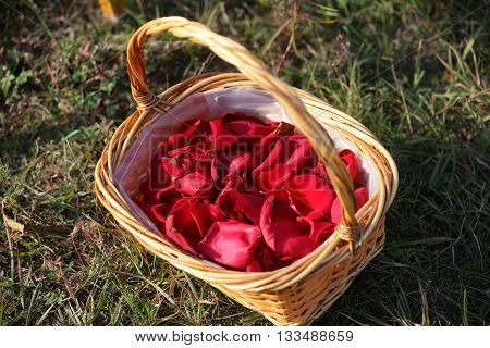 basket with rose petals in a path of rose petals