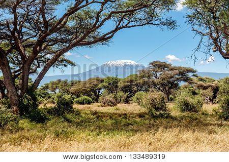 Snow on the top of the Mount Kilimanjaro in Amboseli