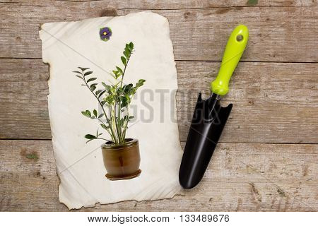 Shovel for horticulture and image houseplant on a wooden background