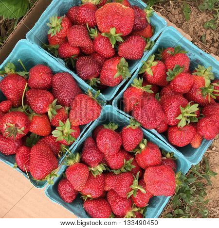 Pick your own strawberries at a local farm.