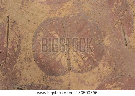 Abstract background of leaves in a autumn.