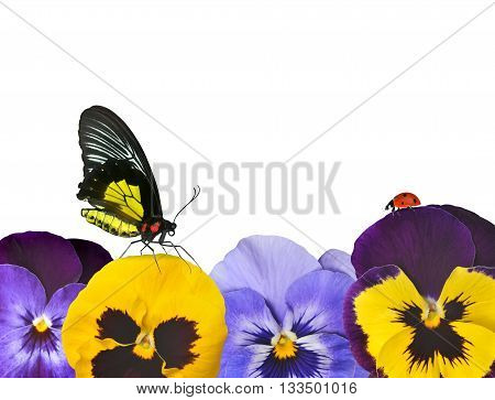 Pansies flower with butterfly and ladybug on white background.