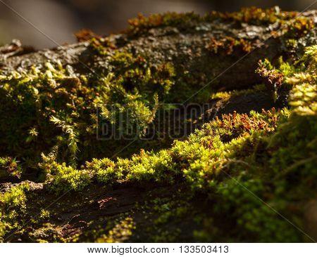 Micro Mossy Landscape