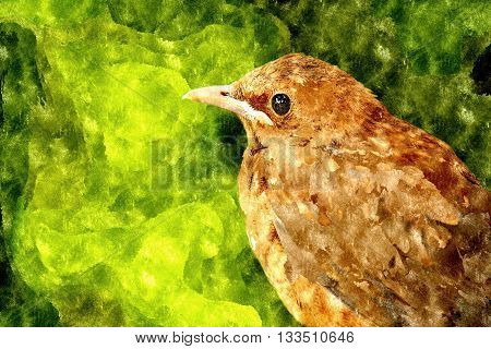 Abstract watercolor digital generated drawing with thrush on green background.