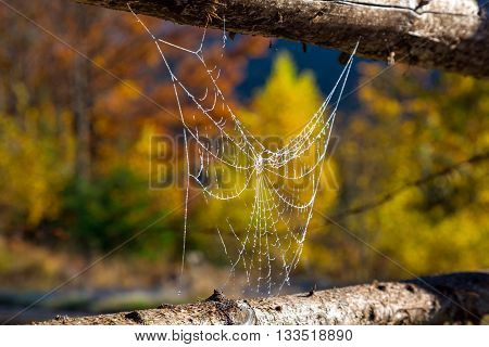 Close Up Image of Frozen by Morning Cold Spiderweb Stretched between traditional rural Fence with Autumnal Forest on Background