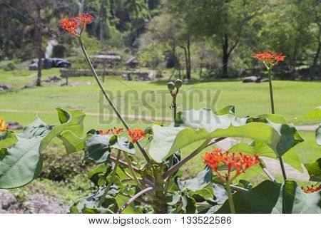 background nature garden green tree red flowers
