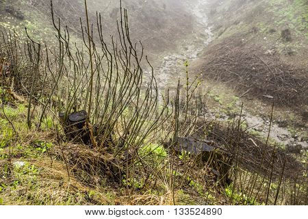 High Angle Scenic View of Small Creek Winding Through Hilly Valley and Obscured by Strange Plants and Fog