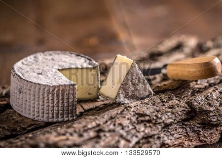 Camembert cheese slice on wooden bark, studio shot
