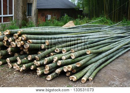 Fresh green  bamboo cut for multi purpose